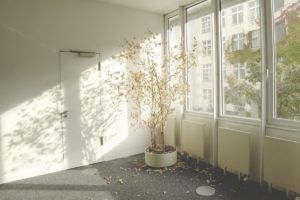 נכס ריק עם עציץ - אילוסטרציה למאמר סיווג נכס ריק בארנונה